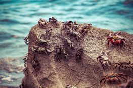 Galapagos San Cristobal Beach Crabs Backpacking Backpacker Travel