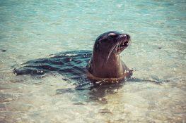 Galapagos San Cristobal Beach Sealion Backpacking Backpacker Travel