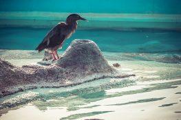 Galapagos San Cristobal Fountain Bird Backpacking Backpacker Travel
