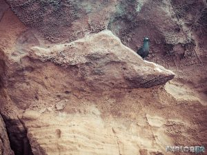Galapagos San Cristobal Kicker Rock Bird Backpacking Backpacker Travel
