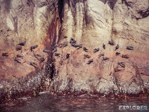 Galapagos San Cristobal Kicker Rock Birds Backpacking Backpacker Travel