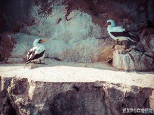 Galapagos San Cristobal Kicker Rock Boobies Backpacking Backpacker Travel