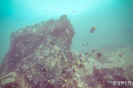 Galapagos San Cristobal Kicker Rock Scuba Diving Angelfish Backpacking Backpacker Travel