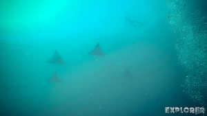 Galapagos San Cristobal Kicker Rock Scuba Diving Eagle Ray Backpacking Backpacker Travel