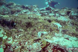 Galapagos San Cristobal Kicker Rock Scuba Diving Fish Backpacking Backpacker Travel