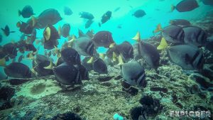 Galapagos San Cristobal Kicker Rock Scuba Diving Razor Surgeonfish Backpacking Backpacker Travel