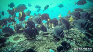 Galapagos San Cristobal Kicker Rock Scuba Diving Razor Surgeonfish Backpacking Backpacker Travel