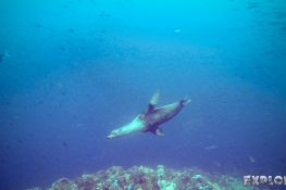 Galapagos San Cristobal Kicker Rock Scuba Diving Sealion Backpacking Backpacker Travel