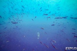Galapagos San Cristobal Kicker Rock Scuba Diving Sealion Backpacking Backpacker Travel