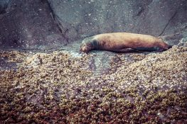 Galapagos San Cristobal Kicker Rock Sealion Backpacking Backpacker Travel