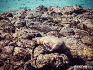 Galapagos San Cristobal Kicker Rock Sealion Backpacking Backpacker Travel