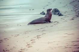Galapagos San Cristobal Punta Carola Beach Sealion Backpacking Backpacker Travel