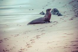 Galapagos San Cristobal Punta Carola Beach Sealion Backpacking Backpacker Travel