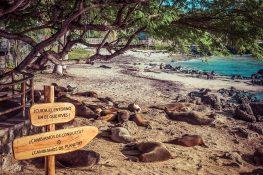 Galapagos San Cristobal Sealions Backpacking Backpacker Travel