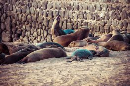 Galapagos San Cristobal Wreck Bay Sealion Backpacking Backpacker Travel