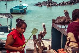 Galapagos Santa Cruz Fish Market Backpacking Backpacker Travel