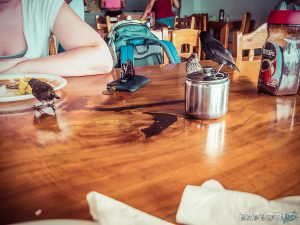 Galapagos Santa Cruz Harbor Cafe Breakfast Finch Backpacking Backpacker Travel