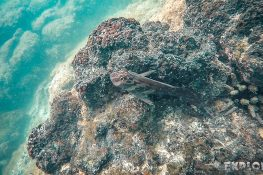 ecuador isabela galapagos concha de perla fish backpacker backpacking travel