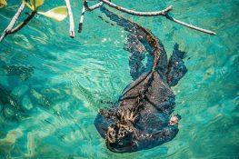 ecuador isabela galapagos concha de perla iguana backpacker backpacking travel