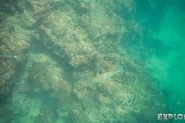 ecuador isabela galapagos concha de perla parrotfish backpacker backpacking travel