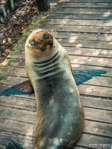 ecuador isabela galapagos concha de perla sealion backpacker backpacking travel