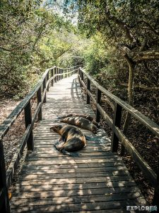 ecuador isabela galapagos concha de perla sealion backpacker backpacking travel