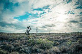 ecuador isabela galapagos desert backpacker backpacking travel