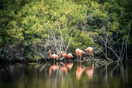 ecuador isabela galapagos flamingo pozas salinas de puerto villamil backpacker backpacking travel