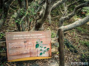 ecuador isabela galapagos pozas salinas de puerto villamil manchineel poisonous apples backpacker backpacking travel