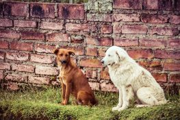 ecuador quilotoa dogs backpacker backpacking travel