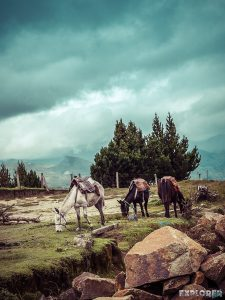 ecuador quilotoa horses backpacker backpacking travel