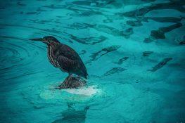 ecuador san cristobal galapagos fountain bird backpacker backpacking travel