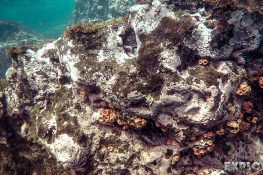 ecuador san cristobal galapagos muelle tijeretas anemone backpacker backpacking travel