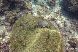 ecuador san cristobal galapagos muelle tijeretas fish backpacker backpacking travel