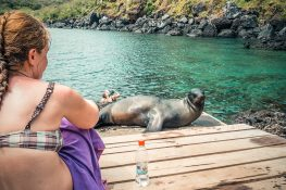 ecuador san cristobal galapagos muelle tijeretas sealion backpacker backpacking travel