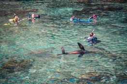 ecuador san cristobal galapagos muelle tijeretas sealion backpacker backpacking travel