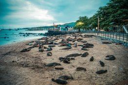 ecuador san cristobal galapagos wreckbay sealions backpacker backpacking travel