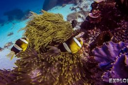 Indonesia Bali Tulamben Nemo Scuba Diving ExplorerVibes Backpacking Travel