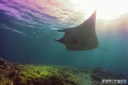 Indonesia Komodo Manta Ray Scuba Diving ExplorerVibes Backpacking Travel 2