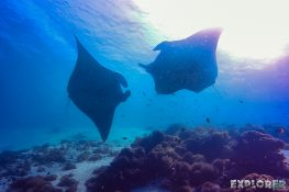Indonesia Komodo Manta Ray Scuba Diving ExplorerVibes Backpacking Travel 4