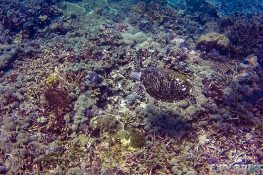 Indonesia Komodo Turtle Scuba Diving ExplorerVibes Backpacking Travel