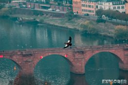 germany heidelberg old bridge goose autunm backpacking backpacker travel