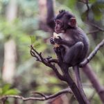 indonesia bali ubud monkey forest helios-44-2 backpacking backpacker travel