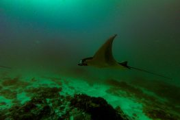 Indonesia Nusa Penida Manta Rays Dive Spot 2