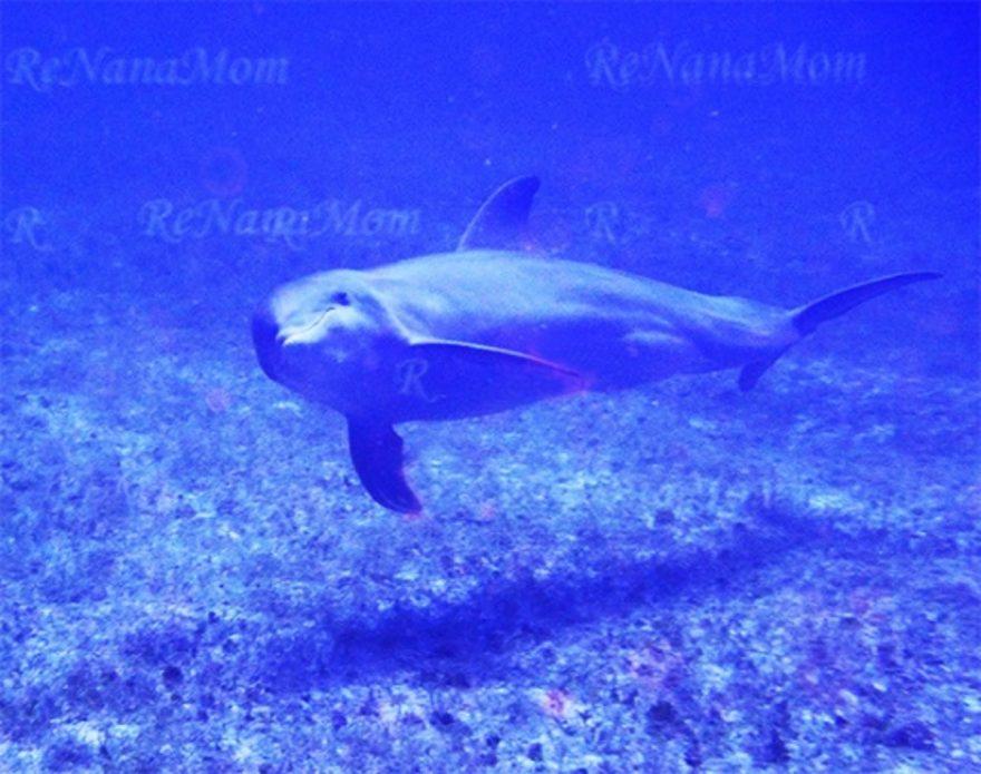 Jamaica Negril Arches Dolphin Dive Spot