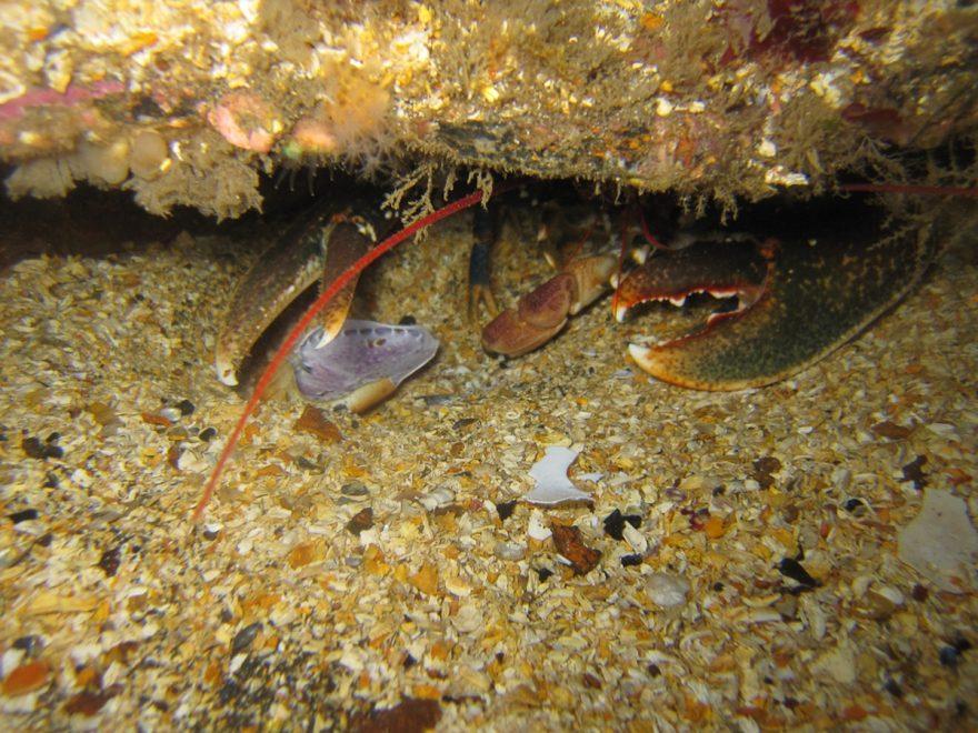 Scottland Orkney Archipelago Scapa flow Dive Site 2