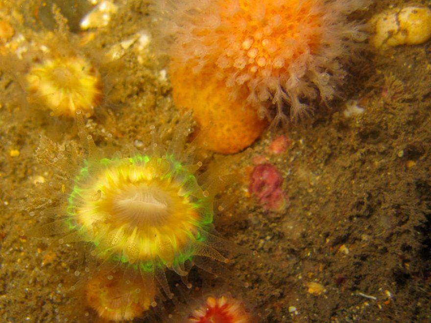 Scottland Orkney Archipelago Scapa flow Dive Site